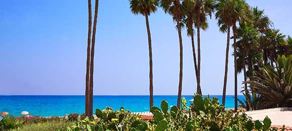 palmbomen Fuenteventura